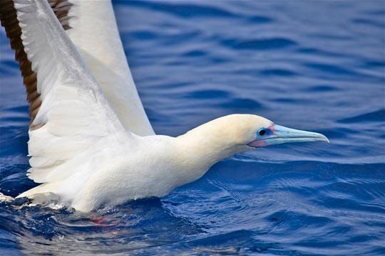 Kauai Sea Birds