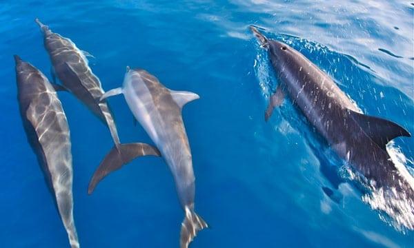 Kauai Dolphin Tours