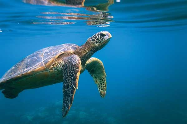 Turtle_IMG_4843