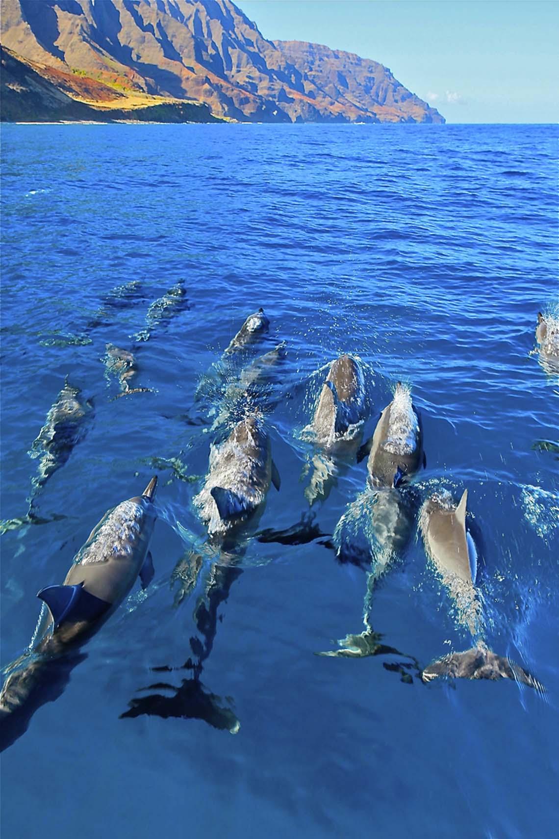 Kauai Rafting Tour
