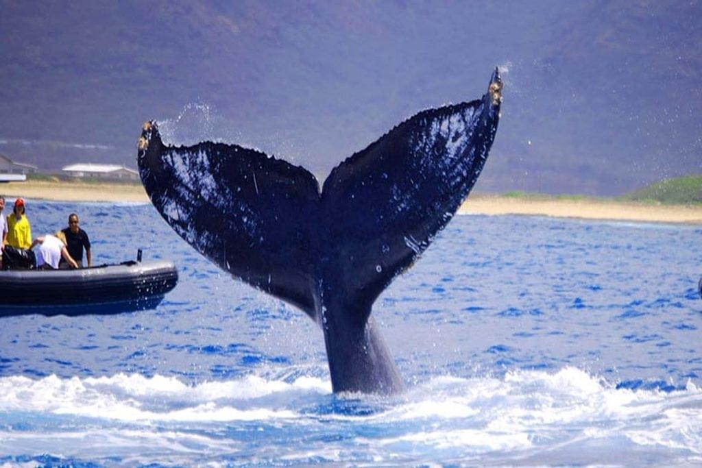 Kauai Boat Tours | Humpback Whale Watching Tour