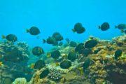 Kauai Snorkel Tours