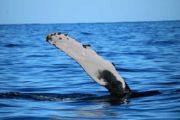 Whale Watching Tours Kauai